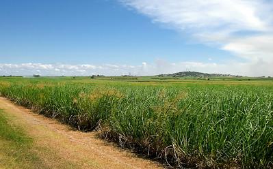 Bundaberg - sugarcane fields
