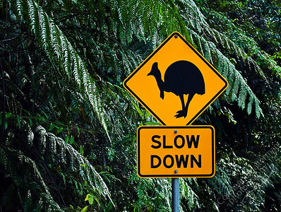 North Queensland - cassowary crossing