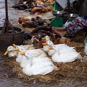 Mekong Delta, Can Duoc market - ducks