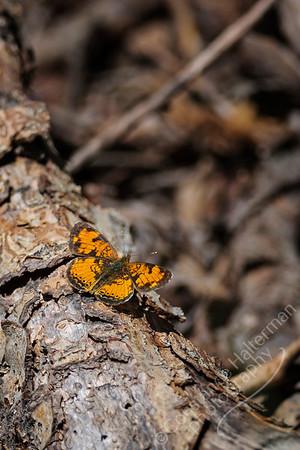 Elk Creek Canyon - orange butterfly