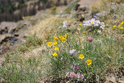 Wolf Creek Pass - wildflowers