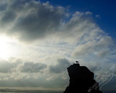 Byron Bay - seagull