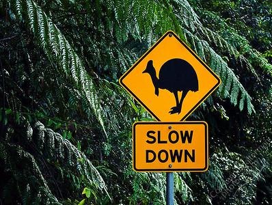 North Queensland - cassowary crossing